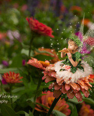 fantasy fairy digital background for photographers with marigold