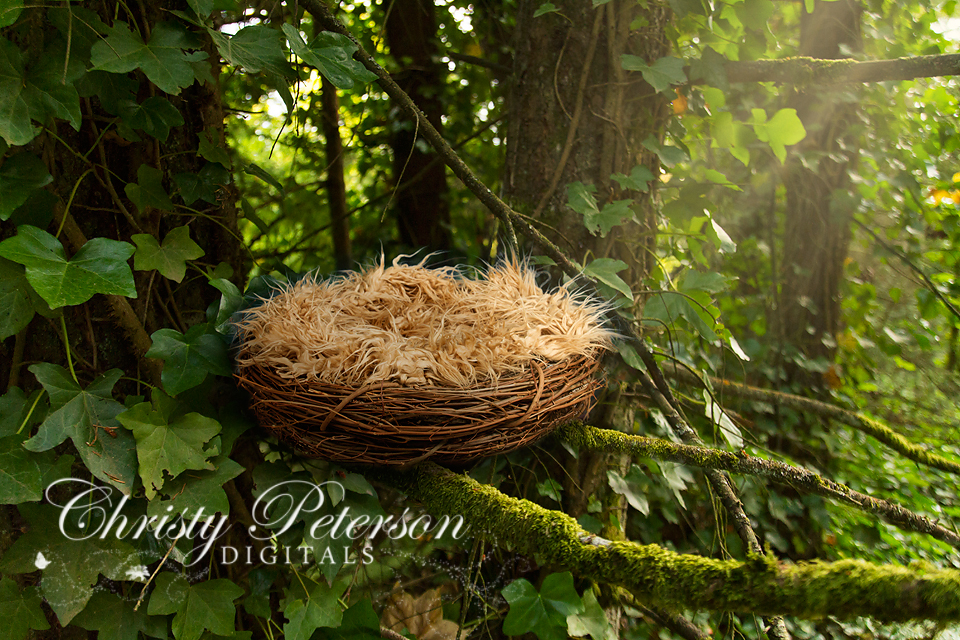 Nest In A Tree Christy Peterson