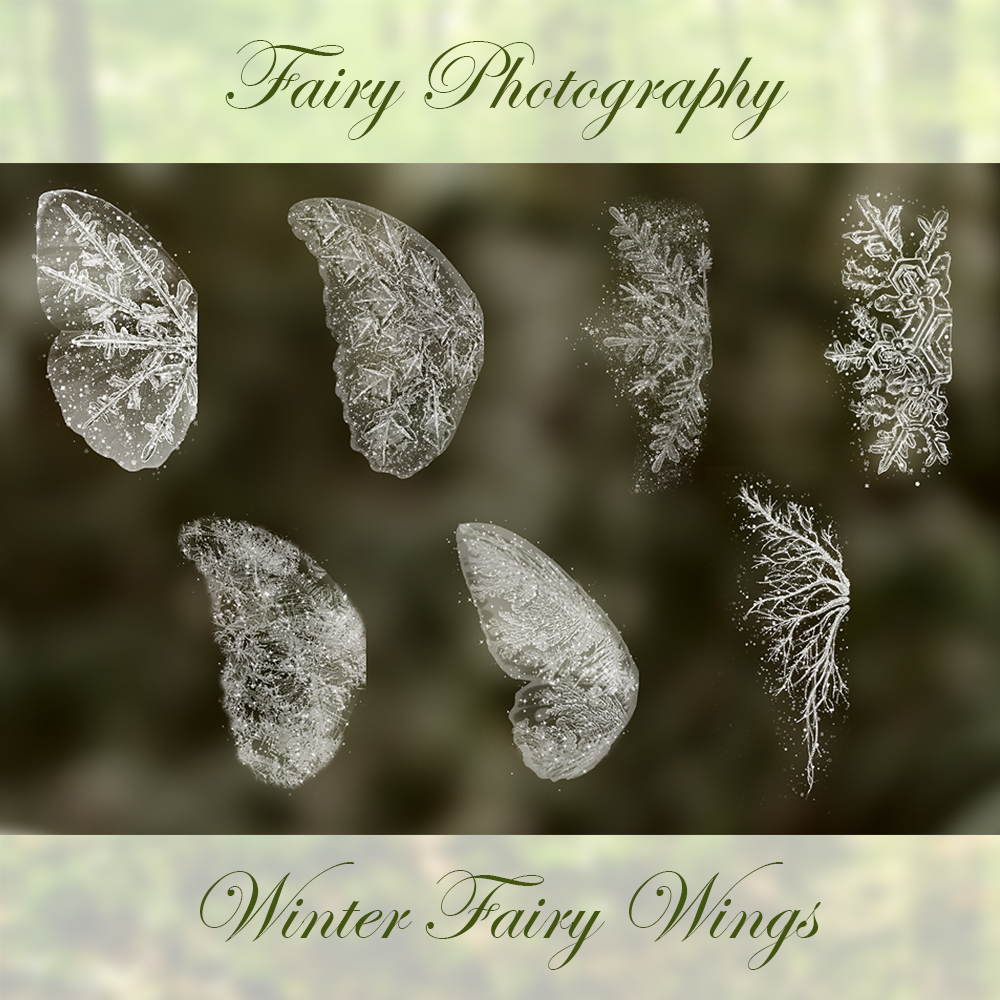 winter fairy snow frost wings photoshop brush and overlay set