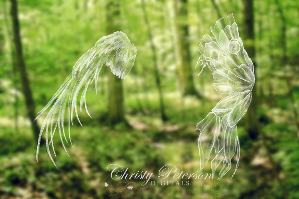 feathered_fairy_wings_photoshop_brushes_or_overlays