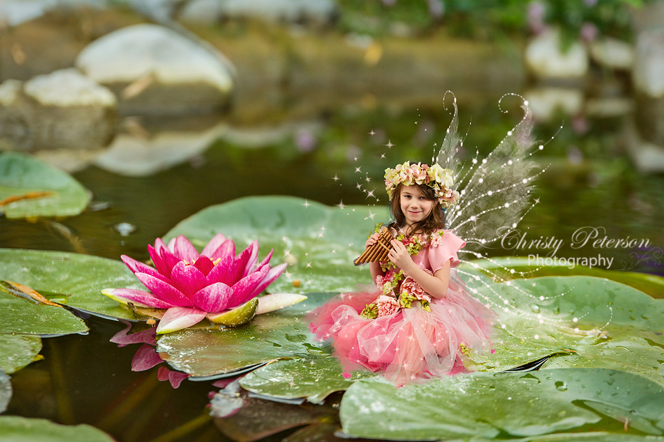 Lily Pads Christy Peterson